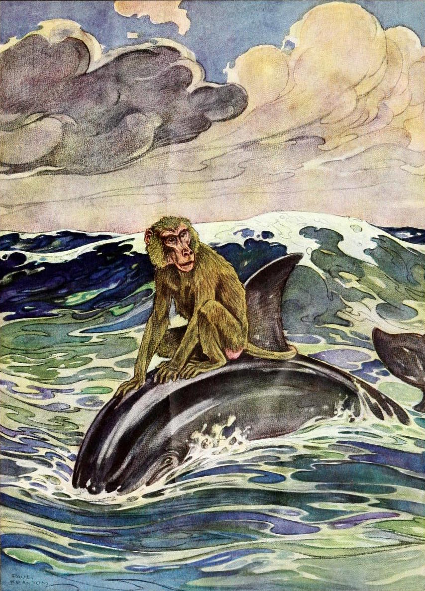 the monkey and the dolphin This is the monkey and the dolphin story for kids one day long ago, some sailors set out to sea in their sailing ship they used to go for long voyages one of them brought his pet monkey along for the long journey.